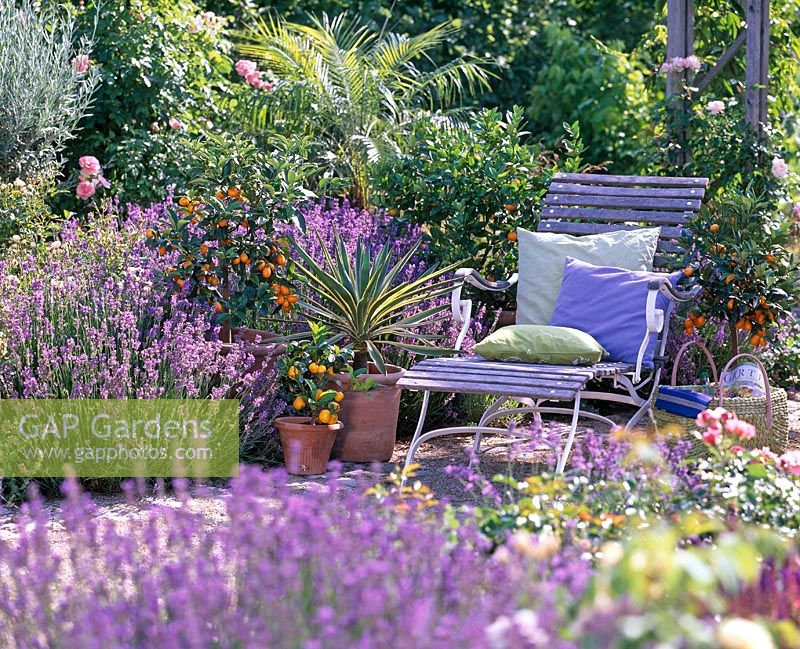 Relaxing area with chair surrounded by Lavandula, Fortunella japonica, Citrofortunella microcarpa, Yucca and Phoenix roebelenii