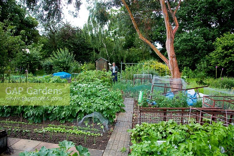 GAP Gardens - Man standing on his allotment - Chalet Gardens in ...