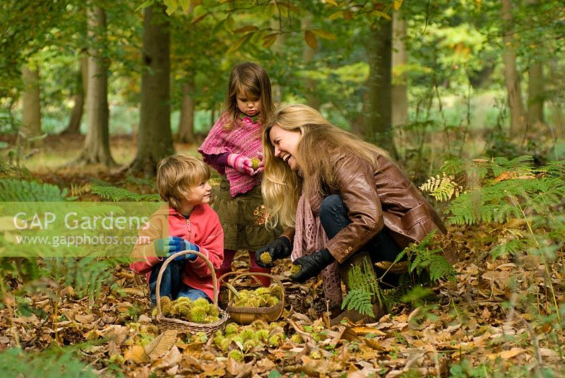 Family in the woods - Foraging for Sweet Chestnuts and collecting them in baskets