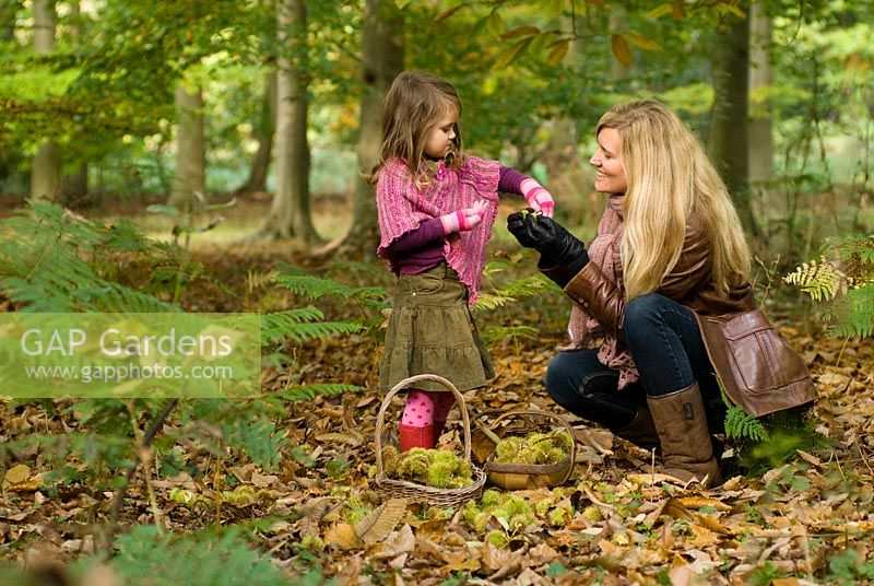 Mother and child - Foraging for Sweet Chestnuts and collecting them in baskets