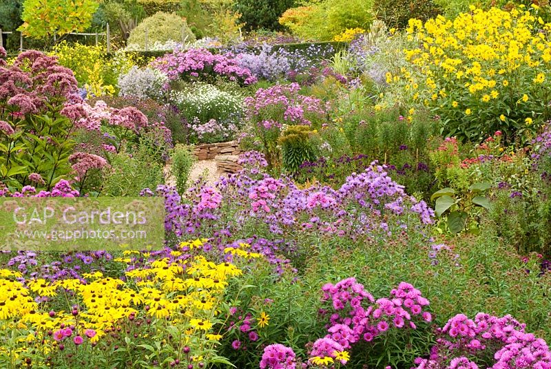 View of the National collection of Autumn flowering Asters - With Asters, Helianthus 'Lemon Queen', Eupatorium and Rudbeckia subtomentosa.