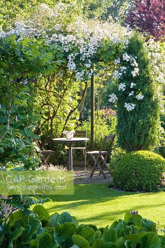 Seating area under pergola with climbing Rosa 'Seagull' in summer garden