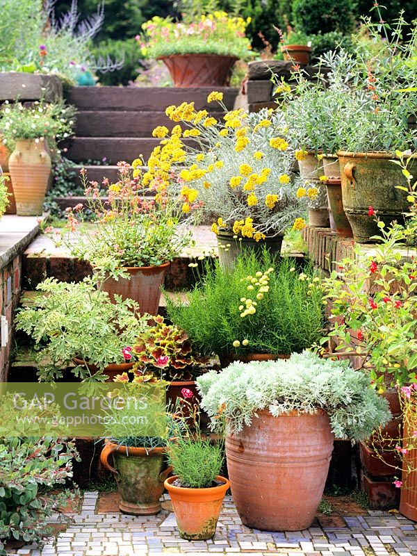 Mediterranean Garden With Mixed Plants In Terracotta Pots