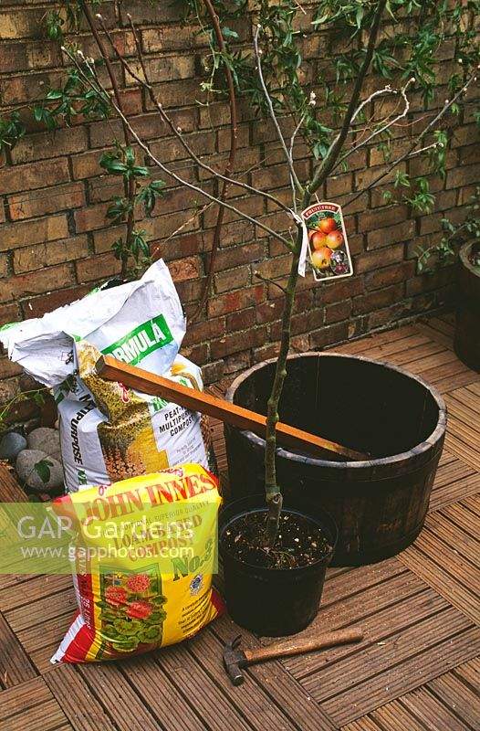 Apple tree in container - What you will need. 1m tree stake, 50cm half barrel, 80 litres of  compost, apple tree on dwarfing or semi-dwarfing rootstock, broken pieces of pot or stones