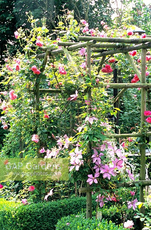 gap gardens archway with rosa and clematis 39 margaret. Black Bedroom Furniture Sets. Home Design Ideas