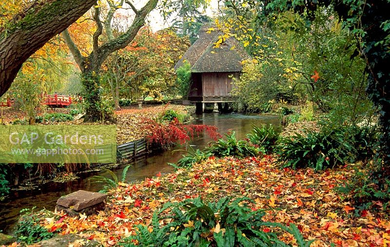 Japanese tea house straddling the River Avon with carpet of fallen leaves from Liquidamber styraciflua