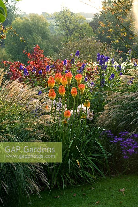 Gap gardens mixed perennial bed with kniphofia and for Ornamental grass bed