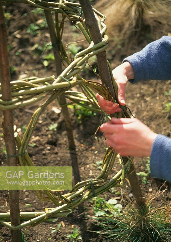Woman making wigwam for sweet peas - You can embelish the basic structure by incorporating extra hoops of willow