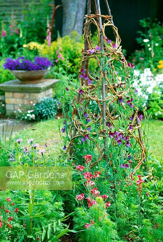 Decorative wigwam for sweet peas - The finished obelisk makes a fine focal point