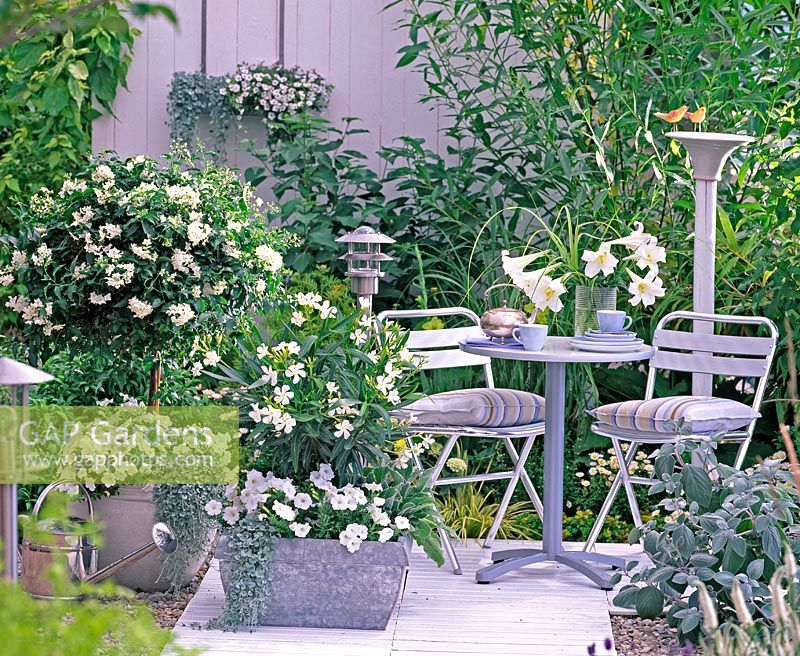 Metal furniture on white themed patio with  pots containing Solanum, Nerium, Petunia, Dichondra 'Silver Falls' and  Plectranthus 'Silver Shield'