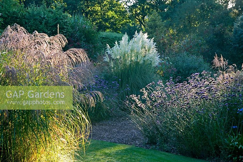 Gap gardens late summer borders with ornamental grasses for Small ornamental grasses for borders