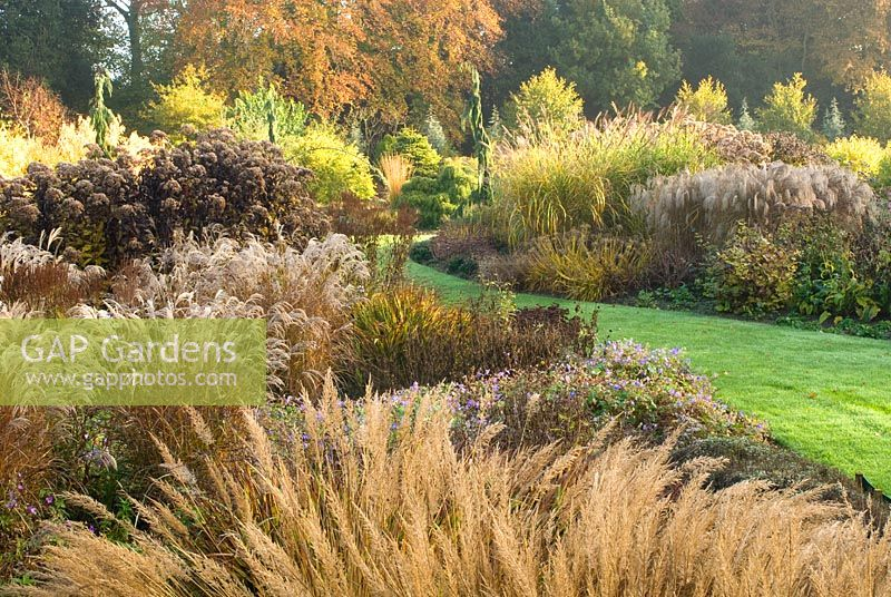 GAP Gardens Autumn view of The Summer Garden National Miscanthus