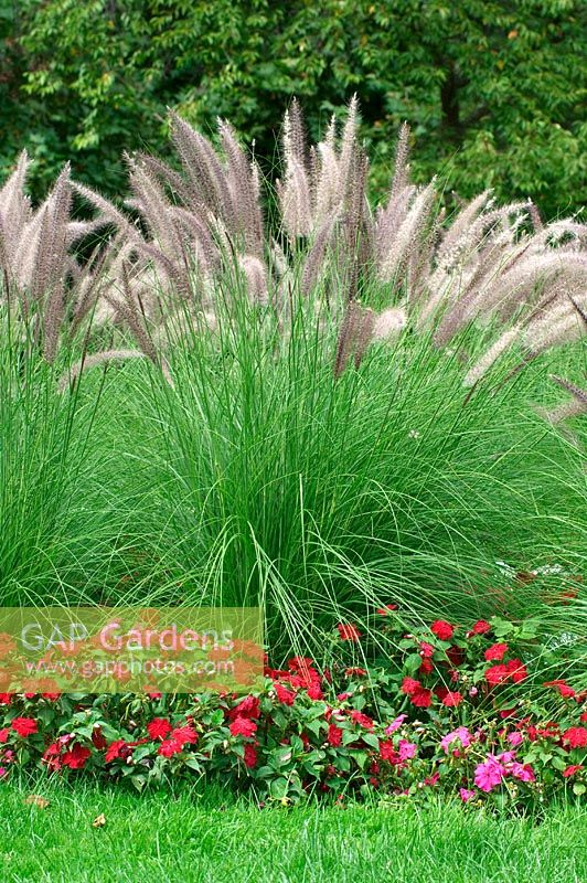 Gap gardens mixed border with ornamental grasses and for Small ornamental grasses for borders