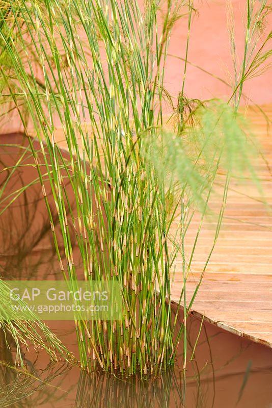 Flemingu0027s And Trailfinder Australian Garden Presented By Melbourne, Victoria.  RHS Chelsea Flower Show 2008