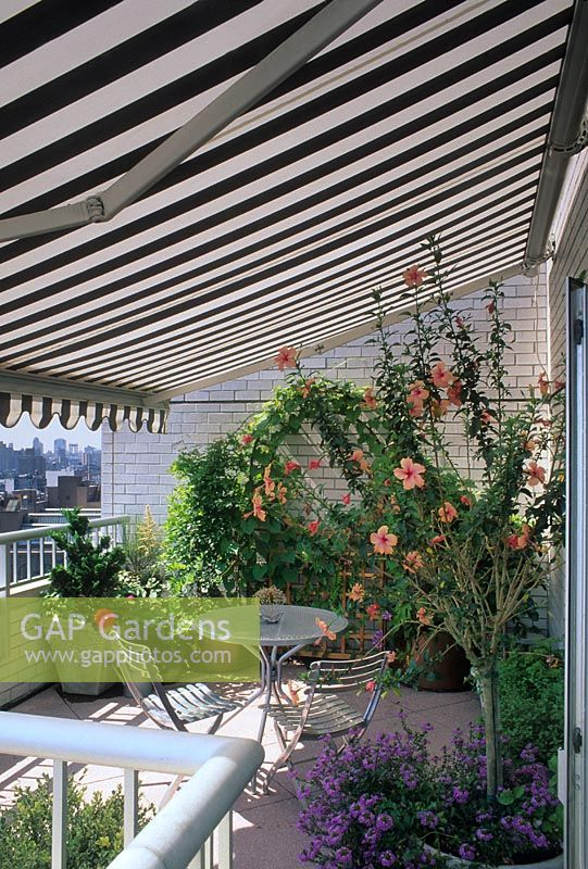 Small balcony shaded by black and white striped canopy - Container of Hibiscus and cafe style table and chairs, USA