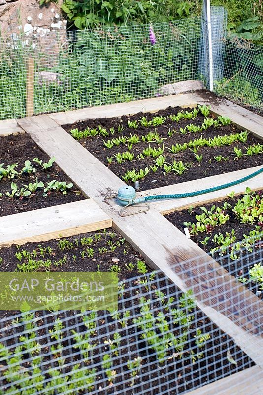 Small Enclosed Vegetable Garden With