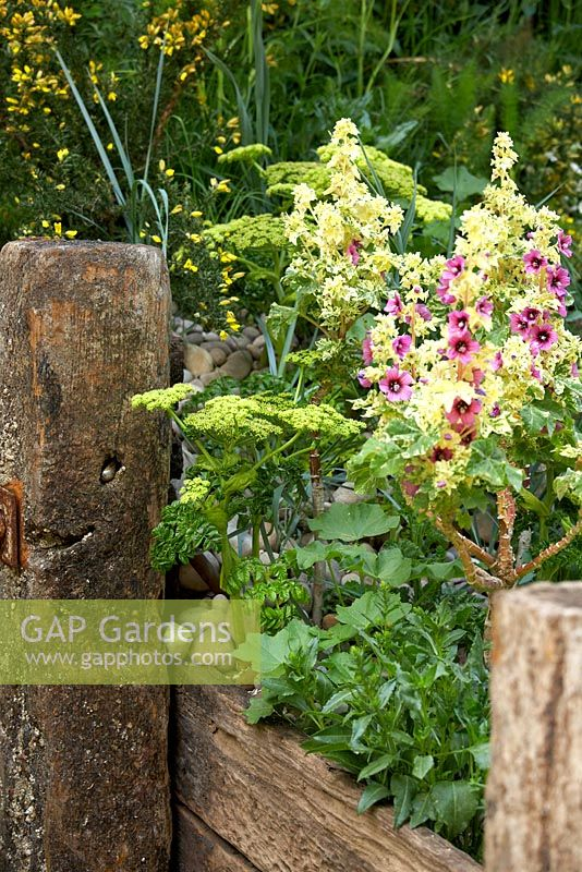 Gap gardens good gifts garden gold medal winner at rhs chelsea flower show 2008 image no - Chelsea flower show gold medal winners ...
