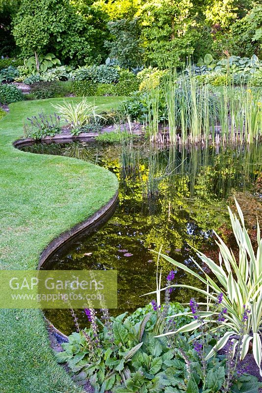 Gap gardens large garden pond with mixed aquatic plants for Large pond plants