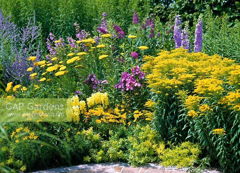 Mixed bed of Solidago, Achillea, Phlox, Delphinium, Coreopsis, Origanum 'Aureum',  Antirrhinum and Perovskia
