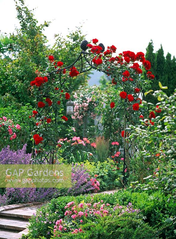 gap gardens rose arch with rosa 39 santana and borders. Black Bedroom Furniture Sets. Home Design Ideas