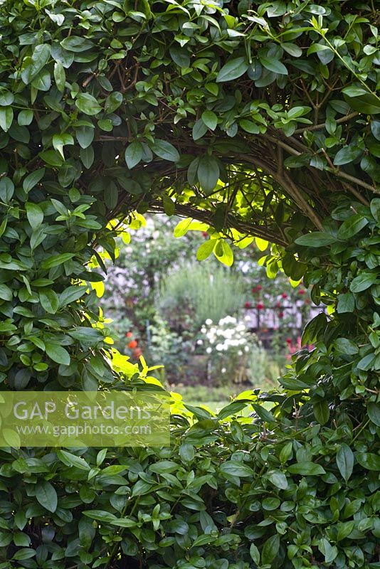Circular opening in hedge