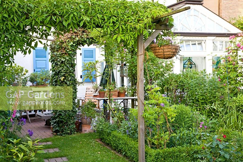 Small urban garden with conservatory and  Parthenocissus climbing over pergola