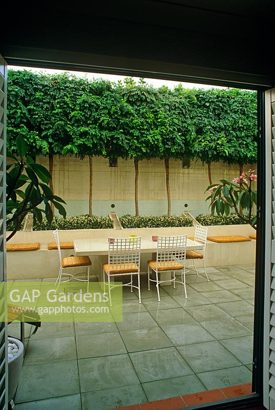 Enclosed courtyard garden with table and chairs and pleached Robinia trees - Maroubra, Sydney, NSW, Australia