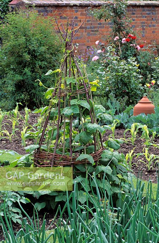 Willow Obelisk For Sweet Pea Support In Kitchen Garden   Old Meadows,  Hampshire