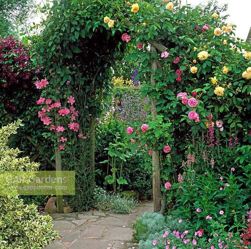 Wooden arch adorned with scented Rosa and Clematis - Grafton Cottage, Staffordshire NGS