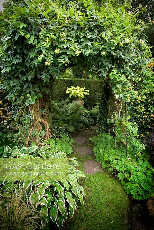 Arch with Hosta 'Sun King', Hosta 'Shade Fanfare' and Lonicera japonica 'Halls Prolific' - Southlands