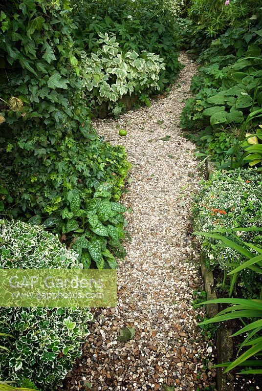 Gravel Path With Planting From Front To Back Left Euonymus Fortunei Silver Queen Pulmonaria Officinalis Sissinghurst White Hedera Helix