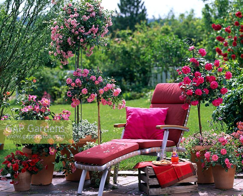 gap gardens sun lounger surrounded by trained rose. Black Bedroom Furniture Sets. Home Design Ideas