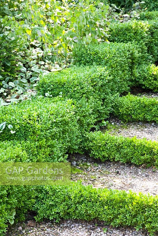 Steps with Buxus