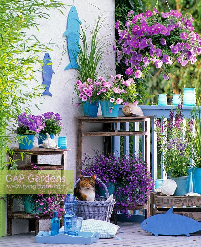 Balcony garden with container plantings of Petunia Dreams 'Sky Blue', Calimero 'Pink Vein', Lobelia 'Big Blue' and 'Pink Star', Campanula carpatica, Salvia farinacea and Angelonia