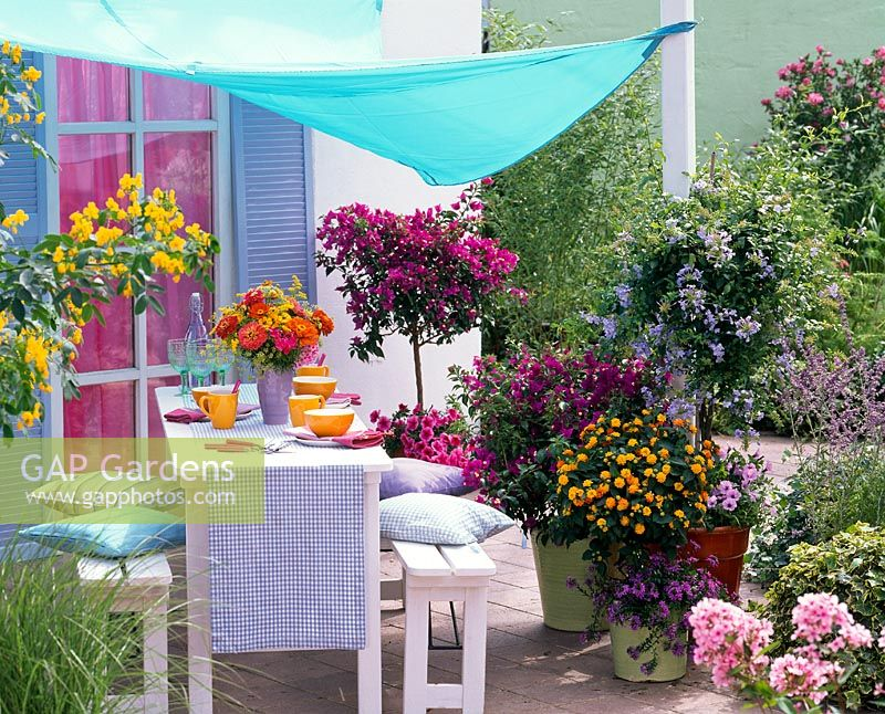 Table and benches on patio with canopy and containers of Bougainvillea, Lantana, Plumbago, Petunia and Scaevola