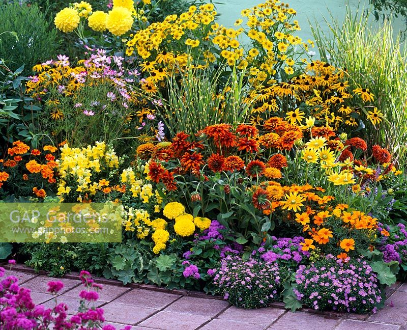 Colour themed bed of Rudbeckia, Tagetes, Antirrhinum, Cosmea, Brachyscome, Ageratum, Helenium and Miscanthus 'Zebrinus'