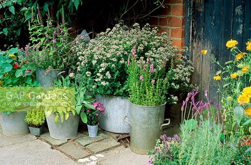 Metal container plantings