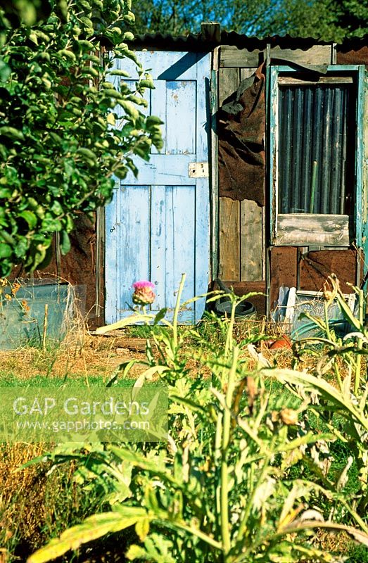 GAP Gardens - Urban Allotments - Feature by Rachel Warne - GAP ...
