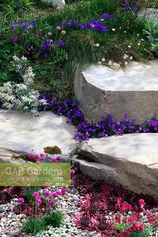 Gravel and rock garden with low growing alpines including Sempervivum, Campanula, Gentiana, Dicentra, Armeria and Leontopodium. 'The Shepherd's Retreat' garden at RHS Hampton Court Flower Show.
