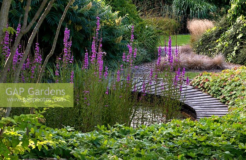 GAP Gardens - Circular pathway surrounds a small pond, with Lythrum ...