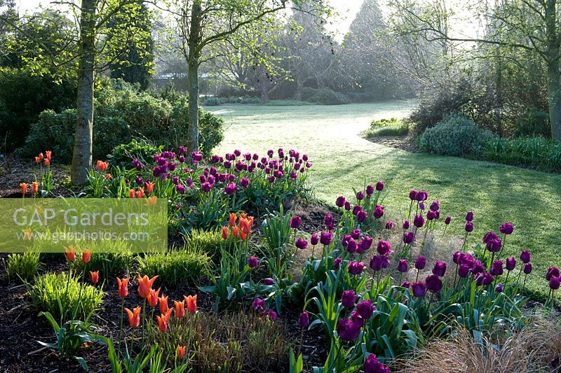 GAP Gardens - Magical early morning light in spring with quite heavy ...