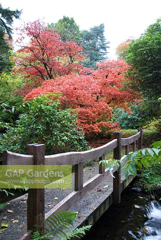 Gap gardens wooden bridge over stream with acer for Stobo water gardens