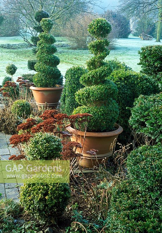 Frosty garden with pots of topiary and Sedum spectabile flowerheads - Woodpeckers, Warwickshire NGS