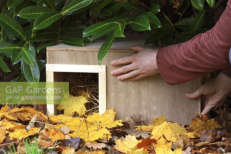 Step by step 9 of making a hedgehog house - Placing wooden box in sheltered garden spot beneath shrubs