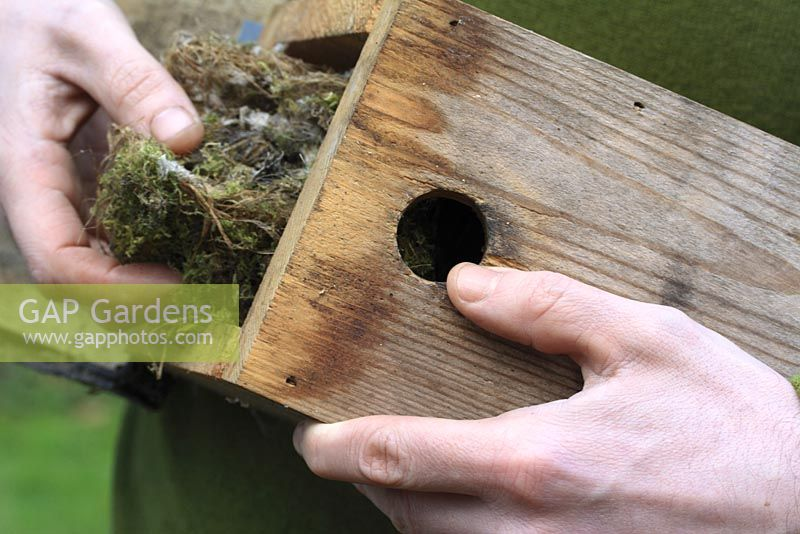 Clearing out bird nesting box in autumn