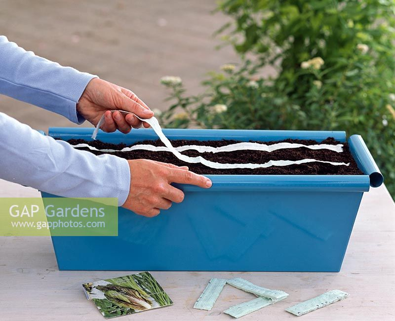 Planting Italian salad meadow in windowbox - Adding seed tapes to trough