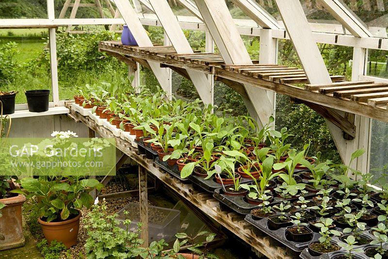 Greenhouse staging with various plants in pots and trays