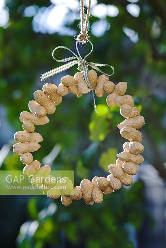 Bird feeder peanut ring with gingham ribbon