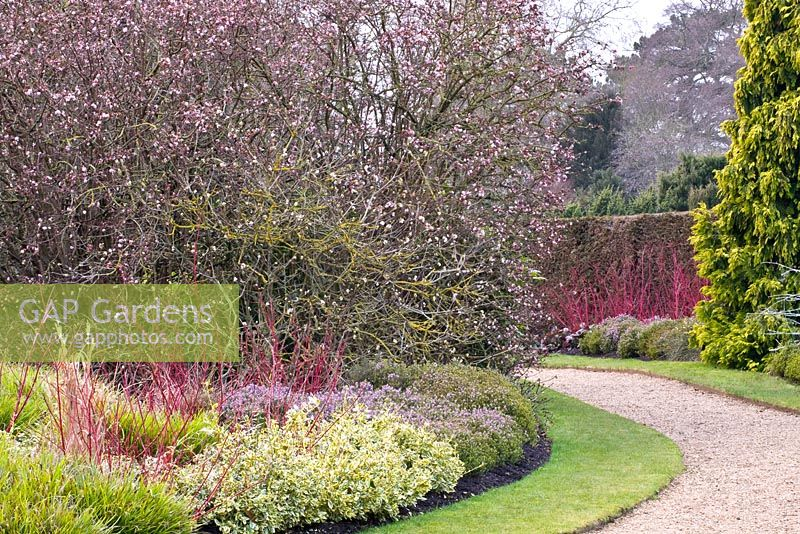 gap gardens mixed winter border with viburnum. Black Bedroom Furniture Sets. Home Design Ideas