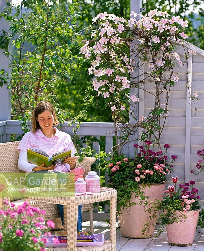 Woman sitting on balcony with pink wicker furniture beside containers of Clematis montana 'Rubens' underplanted with Bellis, Erysimum, Hedera, Euphorbia and Tulipa 'Ballade'